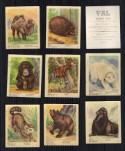 TTRADE/ cigarette cards set Animals of the World, by VAL Gum